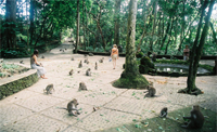 Royal Kamuela Ubud - Monkey Fores