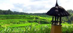 Royal Kamuela Ubud 360 tours